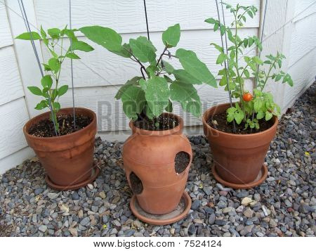 Stock Image Of Garden Plants