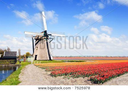 Windmill And Flower Fields
