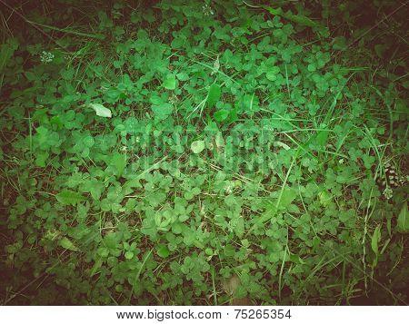 Retro Look Clover Meadow
