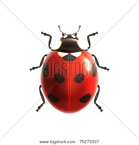 Ladybug realistic isolated