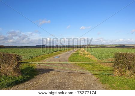 Autumn Field Gate