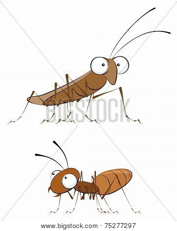 Insects - Cockroach And Ant