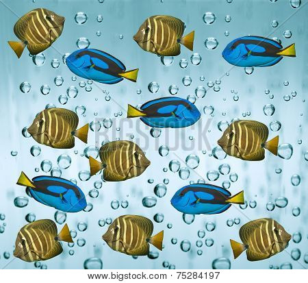 Tropical reef fish in water