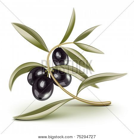 Black olives on a branch