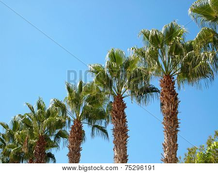 Palm Trees Located By Diagonal