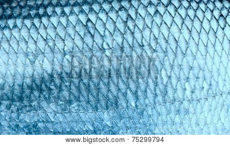 Asp fish scales, natural texture, toned