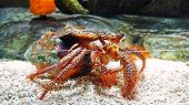 stock photo of hermit  - Hermit Crab crawling on the ocean floor - JPG