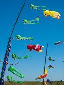 foto of kites  - Kites Flying in Cloudless Sky at the Long Beach Kite Festival Washington USA - JPG