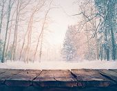 picture of snow forest  - Winter background - JPG