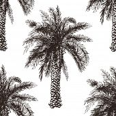 foto of washingtonia  - Hand drawn palm tree seamless in retro style - JPG
