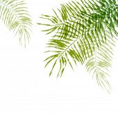 stock photo of washingtonia  - Hand drawn palm tree leaves background - JPG