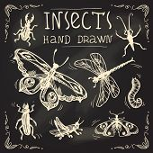 stock photo of cockroach  - Insects sketch chalkboard decorative icons set with midge - JPG