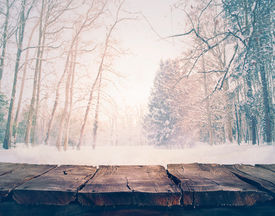 picture of winter trees  - Winter background - JPG