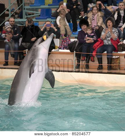 Dolphin Mouth Catches The Ball In The Air At The Rostov Dolphinarium