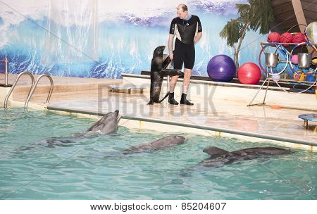 The Trainer Walks With Sea Lion In Front Of The Dolphins