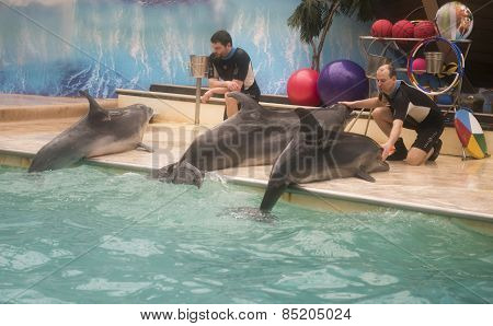 Trainers Talk With Dolphins - Mother And Two Sons
