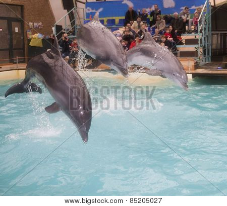 Dolphins: Mom And 2 Sons In A Jump In The Rostov Dolphinarium