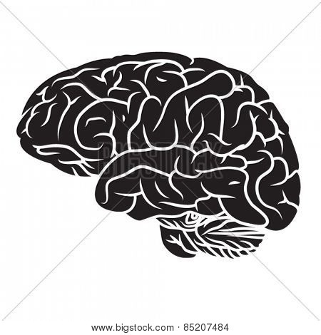 Illustration of human brain.