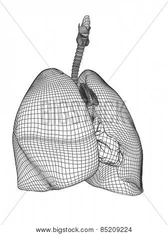 Concept conceptual anatomical human man 3D wireframe mesh respiratory system  with lungs isolated on white background, for anatomy, medical, body, medicine, biology, internal, health, chest pulmonary