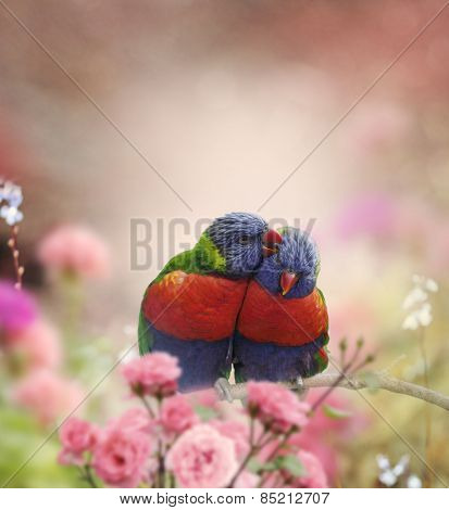 Rainbow Lorikeets Perched In The Garden