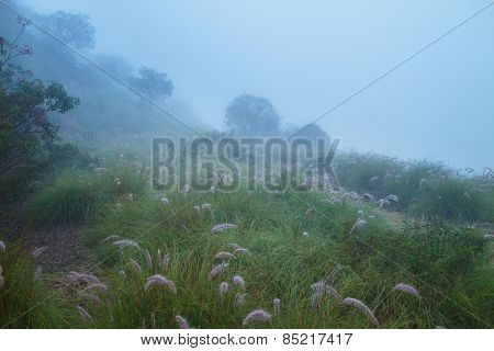 Foggy meadow field in morning mist.
