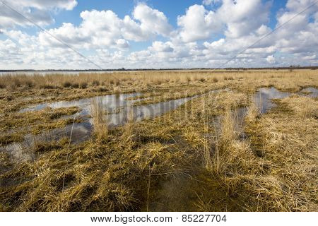 Flooded meadow at spring time