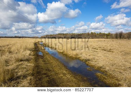 rural road in steppe at nice spring day