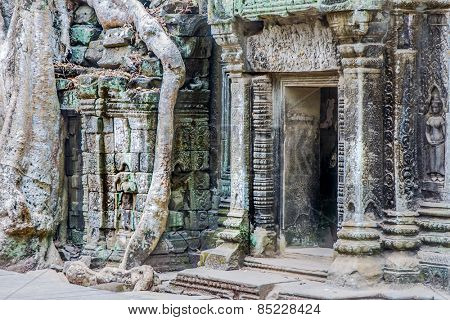 Ficus Strangulosa Banyan tree growing over a doorway in the ancient ruins of Ta Prohm at the Angkor Wat Cambodia