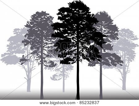 illustration with pine forest silhouettes isolated on white background
