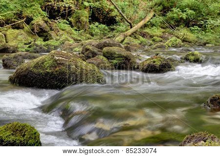 Banks From Mountain Stream