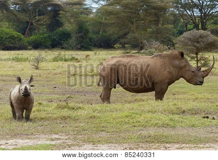 Rhino mother with child