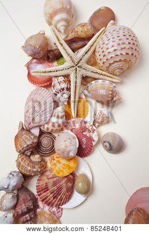 nice shells