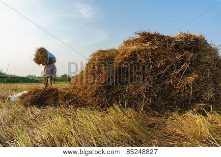 Straw collecting