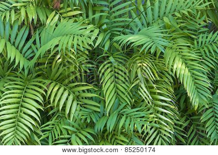 A vibrant, colorful green foliage background