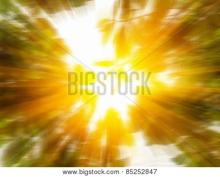 sun light in the blurry natural leaves background