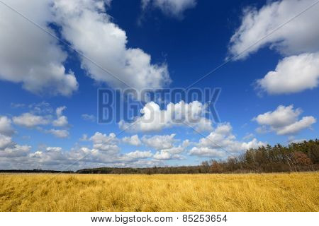 Nice ukrainian landscape with yellow meadow and blue sky