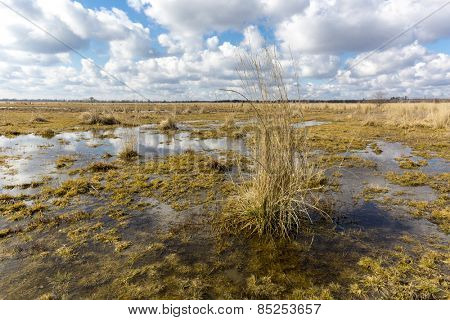 Swamp under nice sky with clouds at spring time