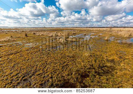 Nice spring day on bog