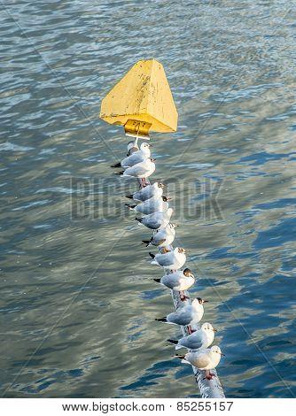 Birds Sitting On A Pile Of A Bridge