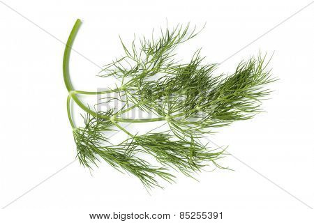 twig of fresh green dill on white background