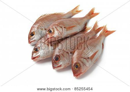 Fresh small raw red snappers on white background