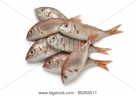 Fresh raw small red snappers on white background
