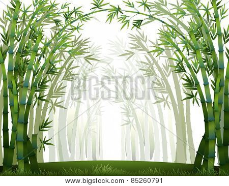 Bamboo forest when it full of fog