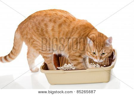 Cat And Plastic Toilet