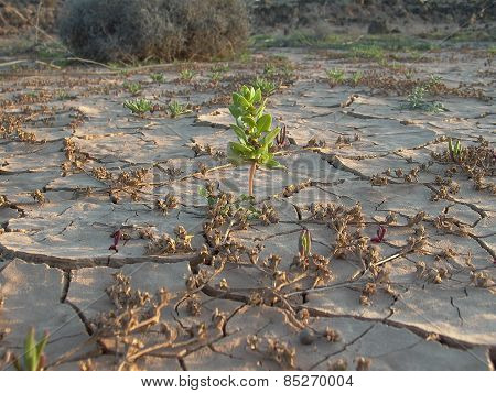 Dried Earth In The Desert