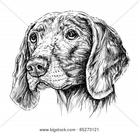 Sketch of Dog Weimar pointer. Vector Illustration