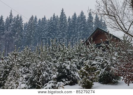 Christmas tree in the snow in winter on a background of the house