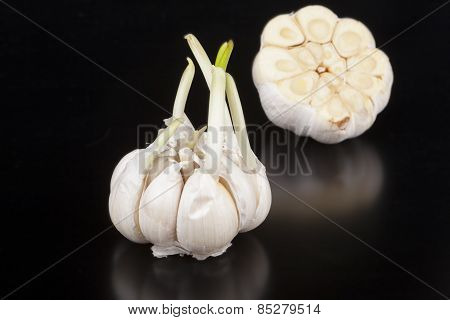 Garlic With Reflection