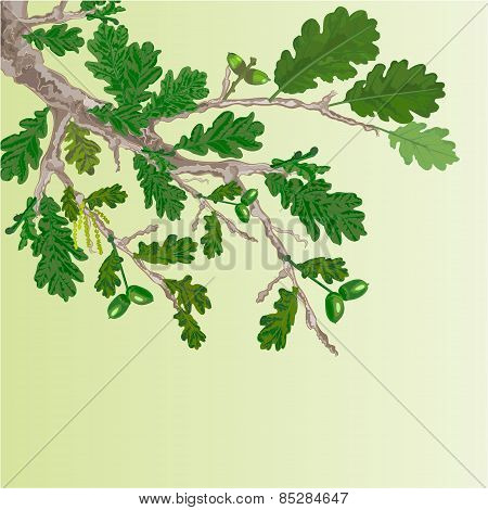 Oak Branch Spring Background Vector