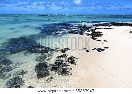 Beach Ile Du Cerfs Seaweed   Indian Ocean Mauritius Rock